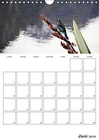 Neuseeland - Vielfalt der Südinsel (Wandkalender 2019 DIN A4 hoch) - Produktdetailbild 6