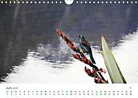 Neuseeland - Vielfalt der Südinsel (Wandkalender 2019 DIN A4 quer) - Produktdetailbild 6