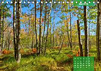 New England - Vielfalt einer Region (Tischkalender 2019 DIN A5 quer) - Produktdetailbild 5