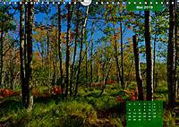 New England - Vielfalt einer Region (Wandkalender 2019 DIN A4 quer) - Produktdetailbild 5