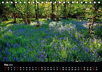 New Forest - England (Tischkalender 2019 DIN A5 quer) - Produktdetailbild 5