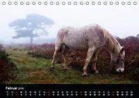 New Forest - England (Tischkalender 2019 DIN A5 quer) - Produktdetailbild 2