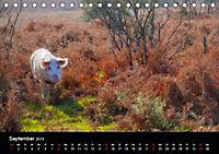 New Forest - England (Tischkalender 2019 DIN A5 quer) - Produktdetailbild 9