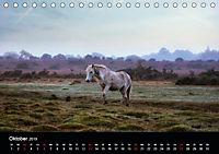 New Forest - England (Tischkalender 2019 DIN A5 quer) - Produktdetailbild 10
