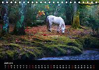 New Forest - England (Tischkalender 2019 DIN A5 quer) - Produktdetailbild 6