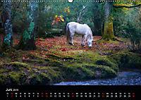 New Forest - England (Wandkalender 2019 DIN A2 quer) - Produktdetailbild 6