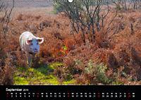 New Forest - England (Wandkalender 2019 DIN A2 quer) - Produktdetailbild 9