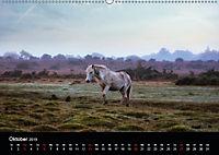 New Forest - England (Wandkalender 2019 DIN A2 quer) - Produktdetailbild 10
