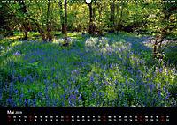 New Forest - England (Wandkalender 2019 DIN A2 quer) - Produktdetailbild 5