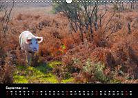 New Forest - England (Wandkalender 2019 DIN A3 quer) - Produktdetailbild 9