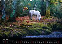 New Forest - England (Wandkalender 2019 DIN A3 quer) - Produktdetailbild 6