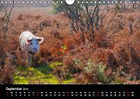 New Forest - England (Wandkalender 2019 DIN A4 quer) - Produktdetailbild 9