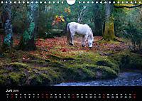 New Forest - England (Wandkalender 2019 DIN A4 quer) - Produktdetailbild 6