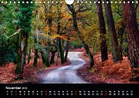 New Forest - England (Wandkalender 2019 DIN A4 quer) - Produktdetailbild 11