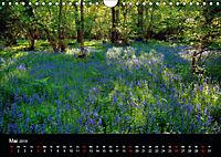 New Forest - England (Wandkalender 2019 DIN A4 quer) - Produktdetailbild 5