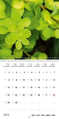 Niagara Gardens (Wall Calendar 2019 300 × 300 mm Square) - Produktdetailbild 4