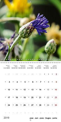 Niagara Gardens (Wall Calendar 2019 300 × 300 mm Square) - Produktdetailbild 6