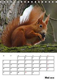 Niedliche Eichhörnchen (Tischkalender 2019 DIN A5 hoch) - Produktdetailbild 5