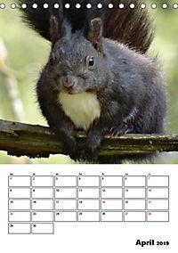 Niedliche Eichhörnchen (Tischkalender 2019 DIN A5 hoch) - Produktdetailbild 4
