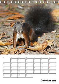Niedliche Eichhörnchen (Tischkalender 2019 DIN A5 hoch) - Produktdetailbild 10