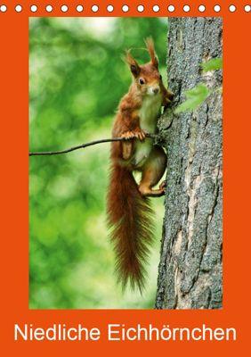 Niedliche Eichhörnchen (Tischkalender 2019 DIN A5 hoch), kattobello