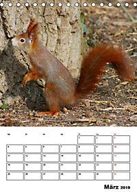 Niedliche Eichhörnchen (Tischkalender 2019 DIN A5 hoch) - Produktdetailbild 3