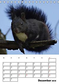 Niedliche Eichhörnchen (Tischkalender 2019 DIN A5 hoch) - Produktdetailbild 12