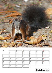 Niedliche Eichhörnchen (Wandkalender 2019 DIN A3 hoch) - Produktdetailbild 10