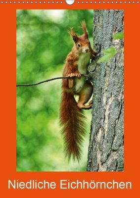 Niedliche Eichhörnchen (Wandkalender 2019 DIN A3 hoch), kattobello