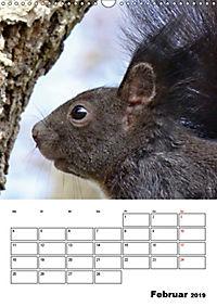 Niedliche Eichhörnchen (Wandkalender 2019 DIN A3 hoch) - Produktdetailbild 2