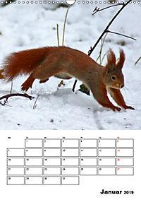 Niedliche Eichhörnchen (Wandkalender 2019 DIN A3 hoch) - Produktdetailbild 1