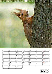 Niedliche Eichhörnchen (Wandkalender 2019 DIN A3 hoch) - Produktdetailbild 7