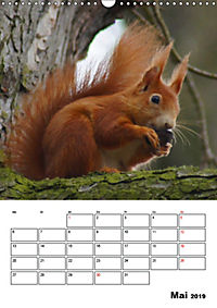 Niedliche Eichhörnchen (Wandkalender 2019 DIN A3 hoch) - Produktdetailbild 5