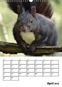 Niedliche Eichhörnchen (Wandkalender 2019 DIN A3 hoch) - Produktdetailbild 4