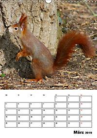 Niedliche Eichhörnchen (Wandkalender 2019 DIN A3 hoch) - Produktdetailbild 3