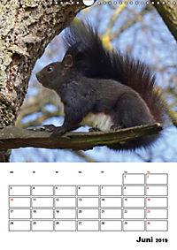 Niedliche Eichhörnchen (Wandkalender 2019 DIN A3 hoch) - Produktdetailbild 6