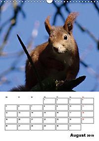 Niedliche Eichhörnchen (Wandkalender 2019 DIN A3 hoch) - Produktdetailbild 8
