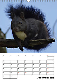 Niedliche Eichhörnchen (Wandkalender 2019 DIN A3 hoch) - Produktdetailbild 12