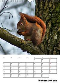 Niedliche Eichhörnchen (Wandkalender 2019 DIN A3 hoch) - Produktdetailbild 11