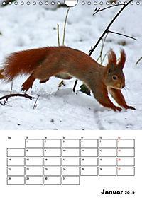 Niedliche Eichhörnchen (Wandkalender 2019 DIN A4 hoch) - Produktdetailbild 1