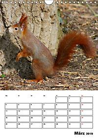 Niedliche Eichhörnchen (Wandkalender 2019 DIN A4 hoch) - Produktdetailbild 3