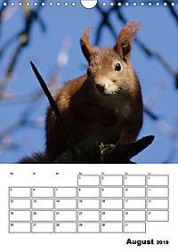 Niedliche Eichhörnchen (Wandkalender 2019 DIN A4 hoch) - Produktdetailbild 8