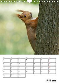 Niedliche Eichhörnchen (Wandkalender 2019 DIN A4 hoch) - Produktdetailbild 7