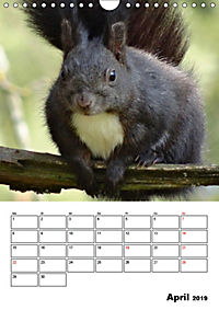 Niedliche Eichhörnchen (Wandkalender 2019 DIN A4 hoch) - Produktdetailbild 4