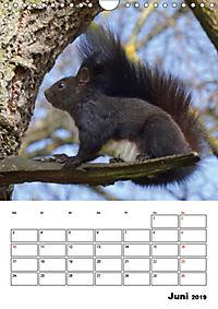 Niedliche Eichhörnchen (Wandkalender 2019 DIN A4 hoch) - Produktdetailbild 6