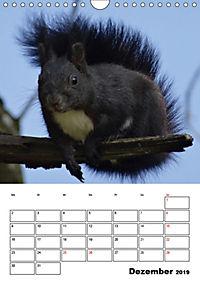 Niedliche Eichhörnchen (Wandkalender 2019 DIN A4 hoch) - Produktdetailbild 12