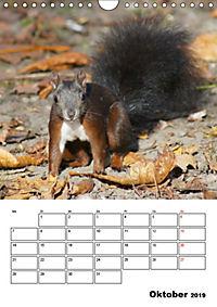 Niedliche Eichhörnchen (Wandkalender 2019 DIN A4 hoch) - Produktdetailbild 10