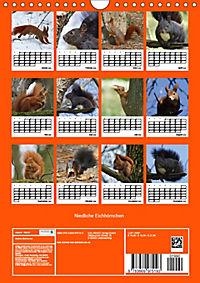 Niedliche Eichhörnchen (Wandkalender 2019 DIN A4 hoch) - Produktdetailbild 13
