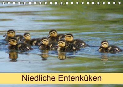 Niedliche Entenküken (Tischkalender 2019 DIN A5 quer), kattobello
