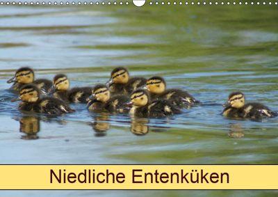 Niedliche Entenküken (Wandkalender 2019 DIN A3 quer), kattobello